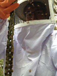 ブラジルの養蜂場でプロポリスを採取させていただきました。